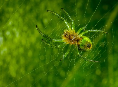 spider-3068315_960_720